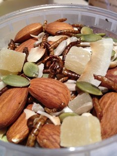 Tropical Treats Insect Trail Mix