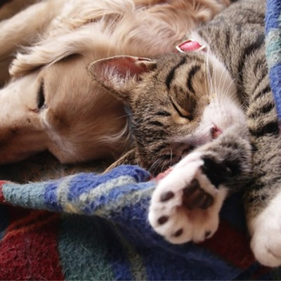 Are My Pets Getting Enough Sleep?