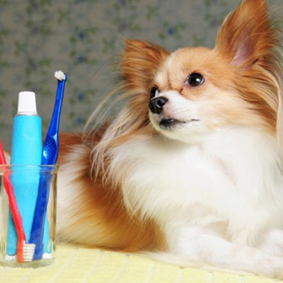 The ABC's of Dog Dental Care