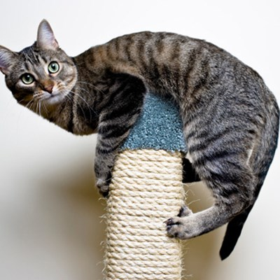 Why cats prefer high places?