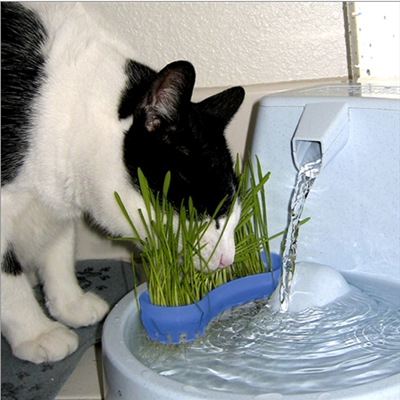 6 Reasons Why Cat Owners Should Consider Hydroponic Grass
