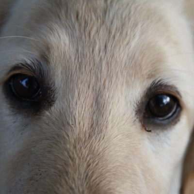 What is Your Dog Telling You with Its Eyes?