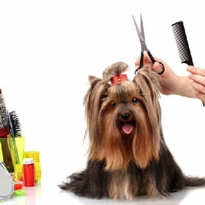 Dog Grooming: The Do's and Don'ts