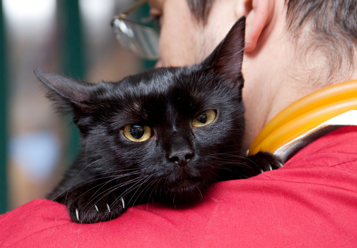 Vestibular Disorders in Cats