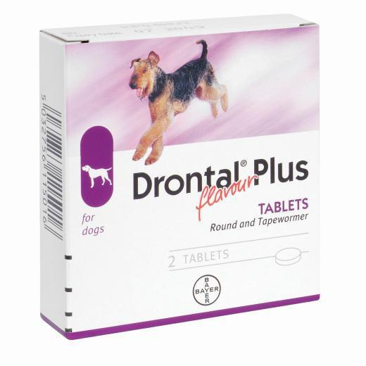 Best All Round Wormer For Dogs