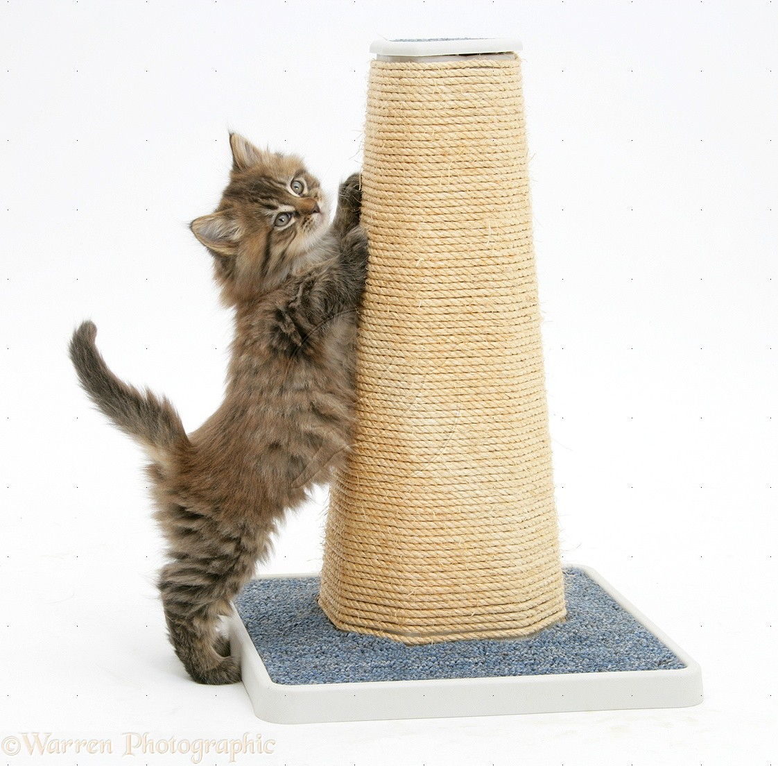 The Best Positions For A Cat's Scratching Post