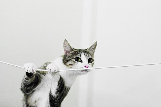 5 ways to prevent your cat from chewing on wires. Black Bedroom Furniture Sets. Home Design Ideas