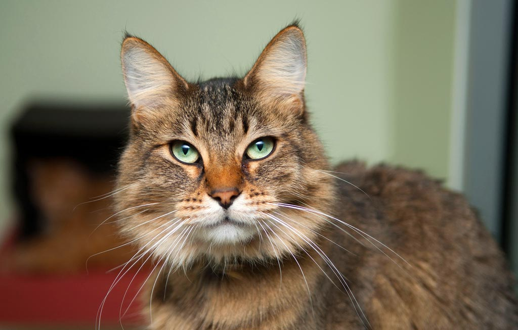 Five Major Health Problems to Look Out For in Older Cats