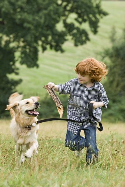 Teaching Kids the Fundamentals of Proper Dog Handling