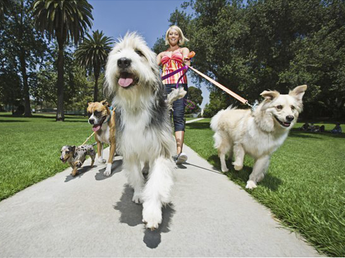 Should You Consider A Dog Walker?