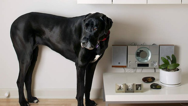 5 Surprising Dog Breeds Perfectly Suited for Apartment Living