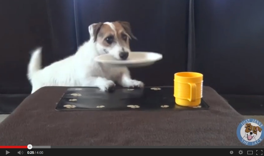 Watch Jesse The Jack Russell Complete Everyday Household Chores