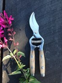 Secateurs - Timber