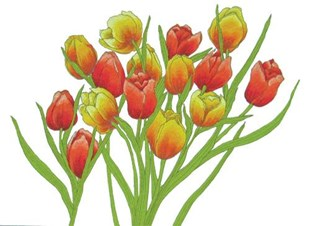 Tulip Time Cushion Covers set-of-2