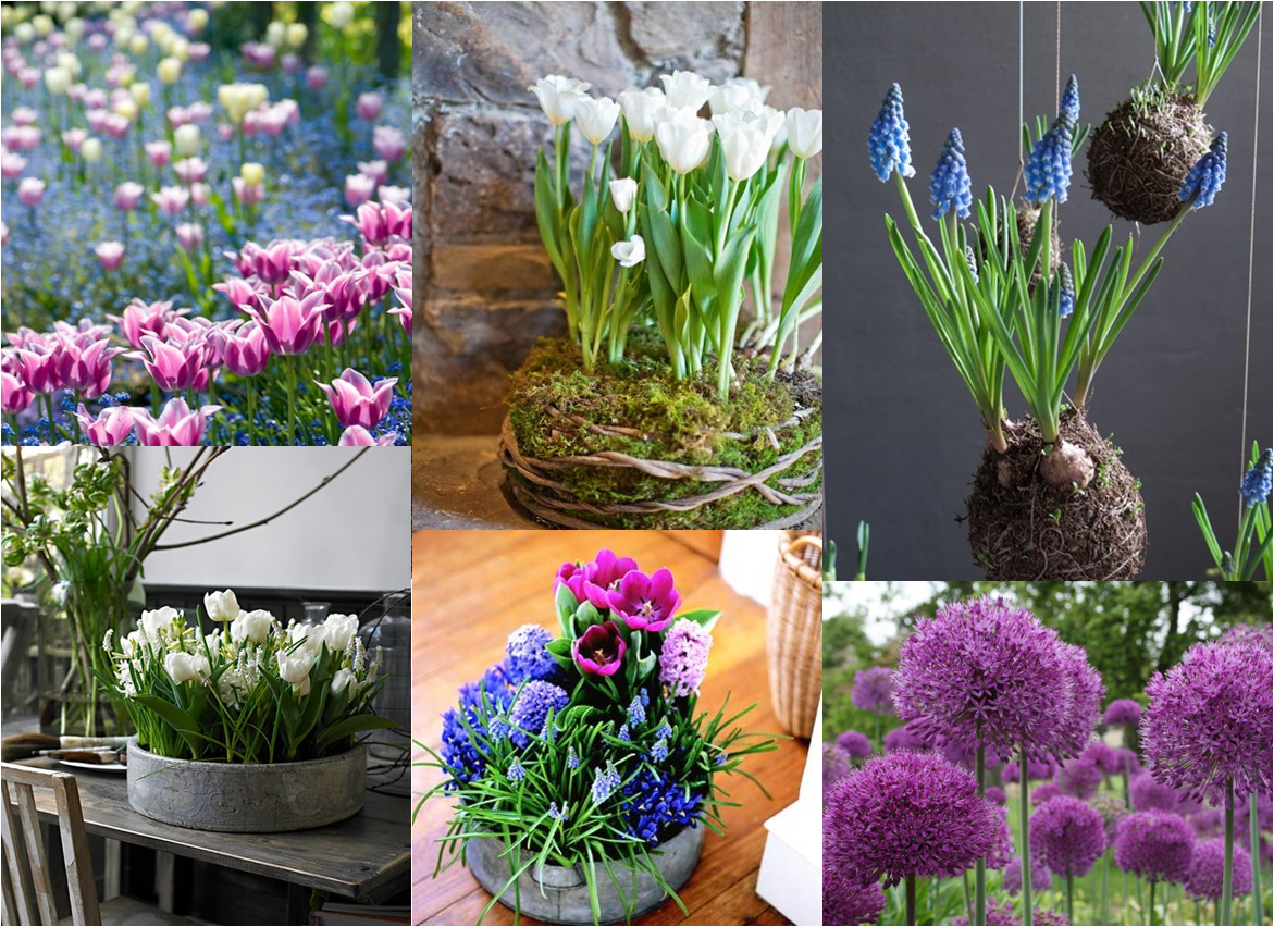 Subiaco Florist - Time to plant your bulbs for spring flowers!