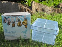 Butterfly Chrysalis Kit