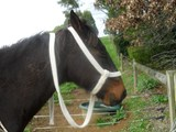 COB 28 MM BRAIDED COTTON HALTERS