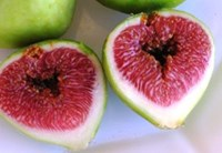 Ficus carica -  White Genoa Fig Fruiting Fig