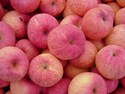 Malus domestica - Red Fuji Dwarf Apple