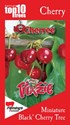 Prunus Trixzie® Black Cherree® Miniature Cherry