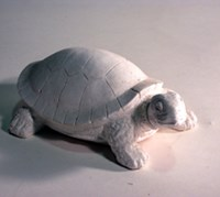LM 1047 Turtle Latex Mould/Mold for Plaster/candle/Soap/Concrete