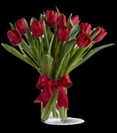 T11Z104A Radiantly Red Tulips
