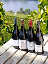 Premium Passion Pinot Noirs Mixed Doz (12 bottles)