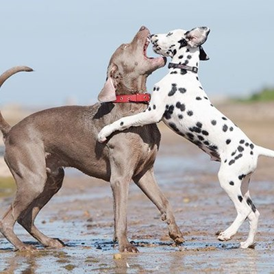 The Safe Way to Break Up a Dog Fight