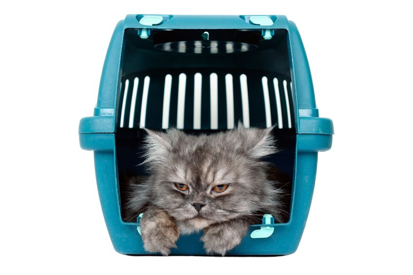 Teaching your cat to like his carrier