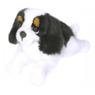 Alex - King Charles Cavaler puppy